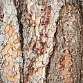 Tree Bark by Tom Gowanlock