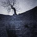 Tree by Svetlana Sewell