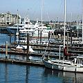 Victoria Inner Harbour by Kelly Manning