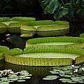 Water Garden by Paul Slebodnick