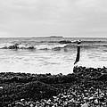 Wave by Falko Follert
