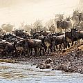 Wildebeest Before The Crossing by Perla Copernik