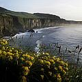 Wildflowers At The Coast, County by The Irish Image Collection