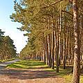 Woodland by Tom Gowanlock