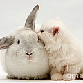 Kitten And Rabbit by Mark Taylor