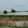 2011 Flood by Debbie Portwood