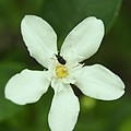 Flowers by Gornganogphatchara Kalapun