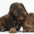 Puppy And Guinea Pig by Mark Taylor