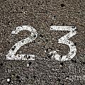 23 by Stephen Mitchell