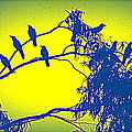 Crows Crows And Crows by Anand Swaroop Manchiraju