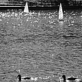 2boats2ducks In Black And White by Rob Hans