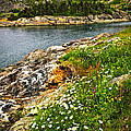 Atlantic Coast In Newfoundland by Elena Elisseeva