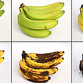 Banana Ripening Sequence by Ted Kinsman