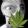 Cannabis Research by Victor De Schwanberg