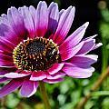 Colorful Flower by Werner Lehmann
