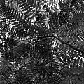 Ferns by Jouko Lehto