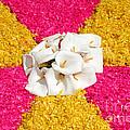 Flower Carpet by Gaspar Avila