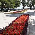 Flowers by Evgeny Pisarev