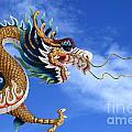 Giant Golden Chinese Dragon by Anek Suwannaphoom