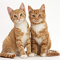 Ginger Kittens by Mark Taylor