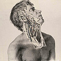 Historical Anatomical Illustration by Science Source