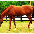 Horses by Rebecca Frank