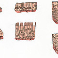 Illustration Of Epithelium Types by Science Source