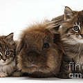 Kittens And Rabbit by Mark Taylor