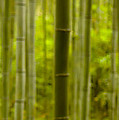 Mystical Bamboo by Sebastian Musial