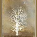 November Moon by Ron Jones