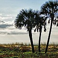 3 Palms On The Beach by Michael Thomas