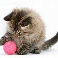 Playful Kitten by Mark Taylor