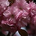 Precious Cherry Blossom by Valia Bradshaw