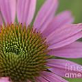 Pretty In Pink by Cheryl Butler
