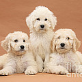 Puppies by Mark Taylor