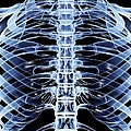 Ribcage, Computer Artwork by Pasieka