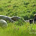 Shepherd by Odon Czintos