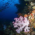 Soft Coral Seascape, Fiji by Todd Winner