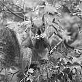 Squirrel Dinner by Valia Bradshaw