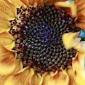 Sunflower by Rick Rauzi