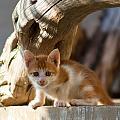 Sweet Cat by Manolis Tsantakis
