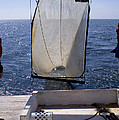 Trawling For Marine Life by Dante Fenolio