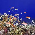 Underwater World by MotHaiBaPhoto Prints