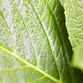 Water Droplets by Jeremy Hudson