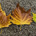 3 Wet Leaves by Steev Stamford