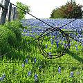 Ennis Tx Bluebonnet Trails by Mike Witte