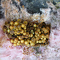 Bumblebee Nest by Ted Kinsman
