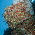 Colourful Reef Scene, Ari And Male by Mathieu Meur
