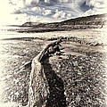 Driftwood by Steve Purnell