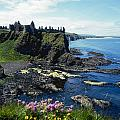 Dunluce Castle, Co Antrim, Ireland by The Irish Image Collection